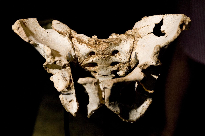 Cabecera Atapuerca